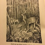 Book Review: Bambi